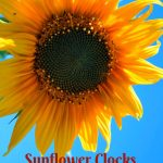 sunflower wall clocks