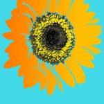 Sunflower Birthday Gifts – Sunflower Presents For Birthdays