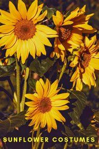 sunflower halloween costume ideas