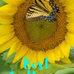 sunflower tattoo designs ideas